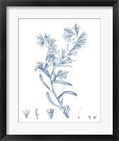Framed Antique Botanical in Blue II
