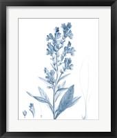 Framed Antique Botanical in Blue III