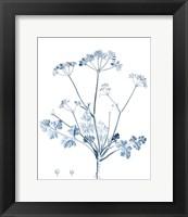 Framed Antique Botanical in Blue IV