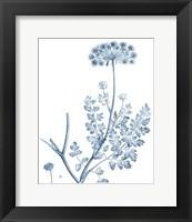 Framed Antique Botanical in Blue V