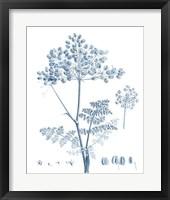 Framed Antique Botanical in Blue VI