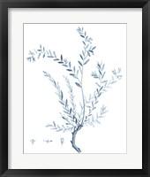 Framed Antique Botanical in Blue VII