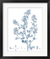 Framed Antique Botanical in Blue VIII