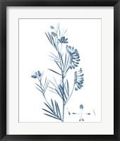 Framed Antique Botanical in Blue IX