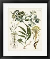 Framed Fanciful Ferns I