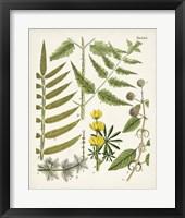 Framed Fanciful Ferns II