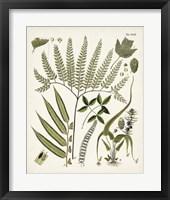 Framed Fanciful Ferns III