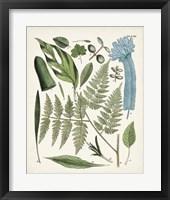 Framed Fanciful Ferns IV