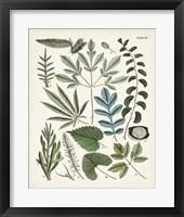 Framed Fanciful Ferns VII