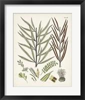 Framed Fanciful Ferns VIII