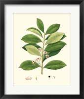 Spring Green Foliage III Framed Print