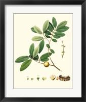 Framed Spring Green Foliage VII