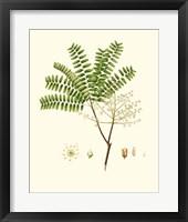 Spring Green Foliage VIII Framed Print