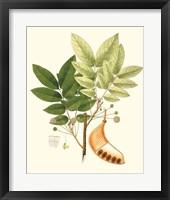 Spring Green Foliage IX Framed Print