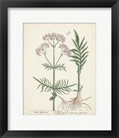 Framed Antique Herbs I
