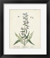 Framed Antique Herbs II