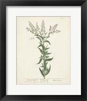 Framed Antique Herbs IV