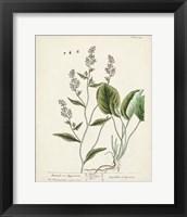 Framed Antique Herbs V