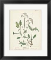 Framed Antique Herbs VI