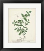 Framed Antique Herbs IX