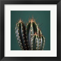 Framed Cacti IV