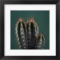Framed Cacti III