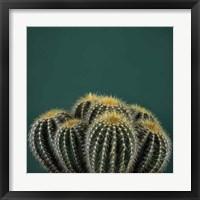 Framed Cacti I