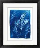 Framed Cyanotype Tropical III