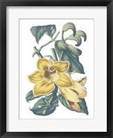 Framed Antique Botanical XVIII Cool