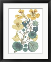 Framed Antique Botanical XVII Cool