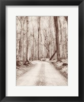 Framed Road in the Woods