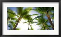 Framed Oahu Palms