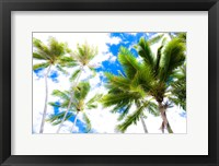Framed Hawaii Oahu Palms