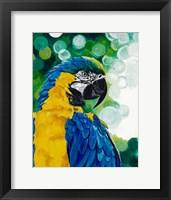 Framed Brilliant Parrot