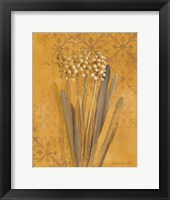 Framed Hyacinth II