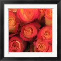 Framed Peach Roses