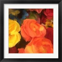Framed Rose Blooms