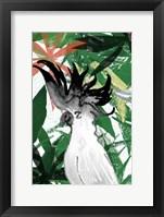 Framed Hidden Cockatoo