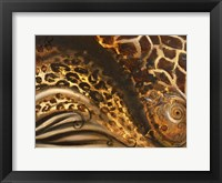 Framed African Touch II