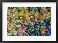 Framed Aerial Fall Trees