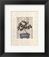 Framed Gardenia Bonsai