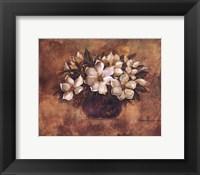 Antique Magnolia II Framed Print