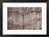 Framed Provincetown Winter Vines, Cape Cod