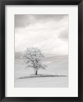 Framed Infrared of Lone Tree in Wheat Field 1