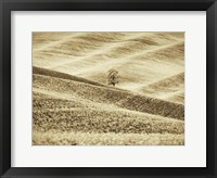 Framed Infrared of Lone Tree in Wheat Field 2