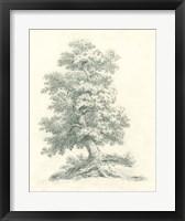 Framed Tree Study II