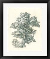 Framed Tree Study I