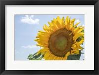 Framed Sunflowers Blooming Near Lavender Fields