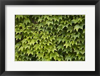 Framed Natural Plants And Leaves Growing On Wall In Provence