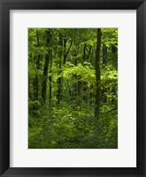 Framed Woodland Hainich In Thuringia, Germany